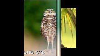 OWL. Картинки из жизни совиной. Учимся у птиц
