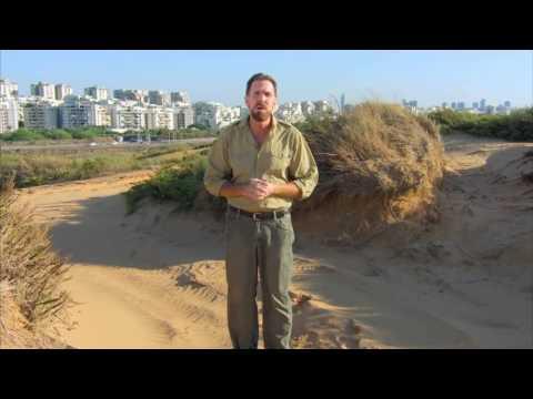 David Dolan's History Of Modern Israel