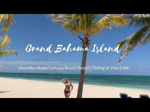Swimming Pigs Grand Bahama Island