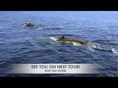 Bryde´s Whales on tour