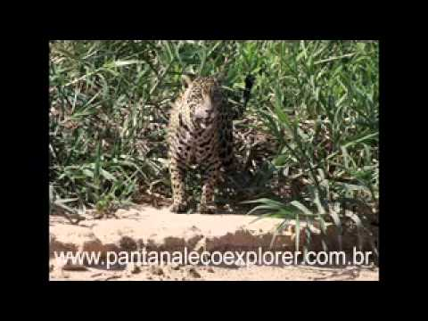 Pantanal Wildlife Tour - Cuiabá - Mato Grosso - Brazil