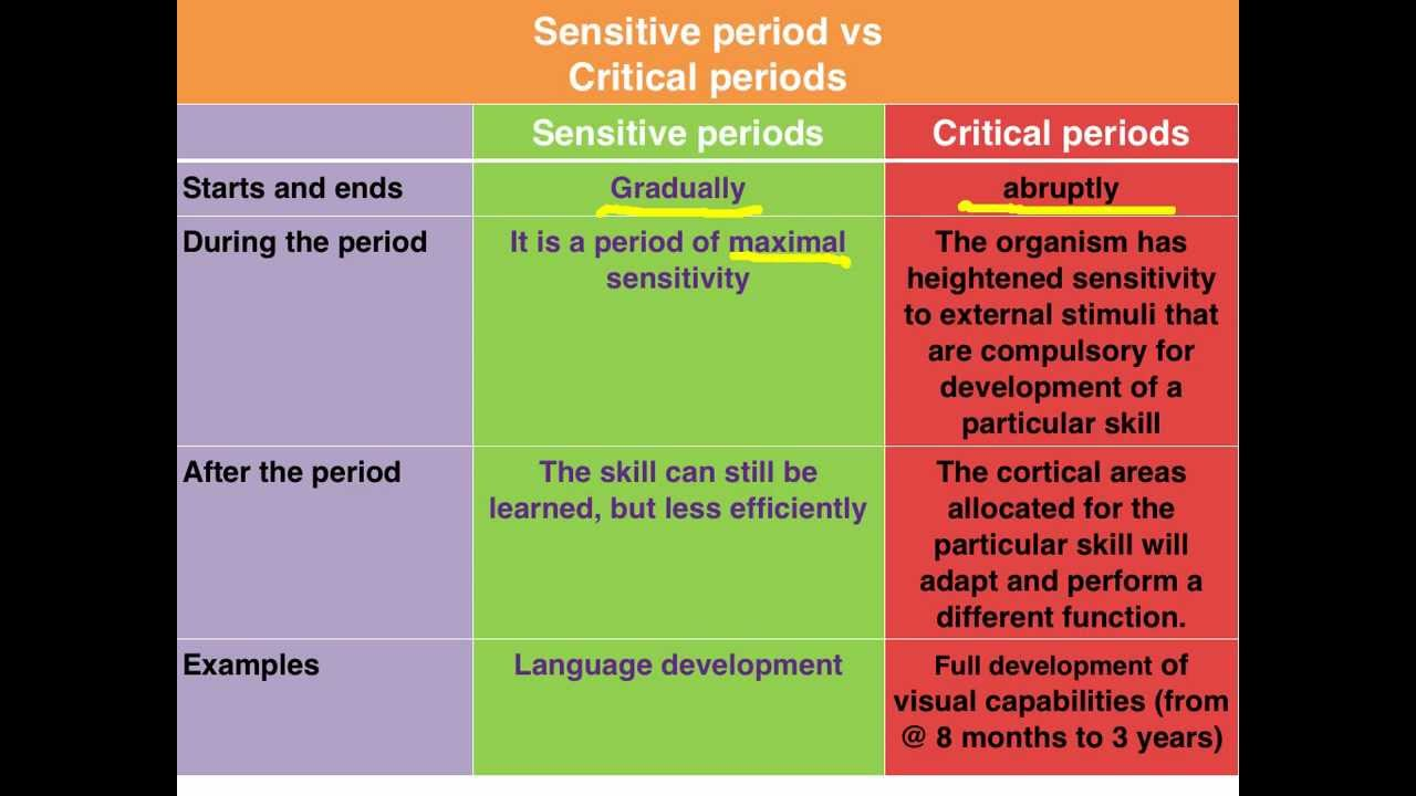 Sensitive vs Critical periods of learning  VCE Psychology  YouTube