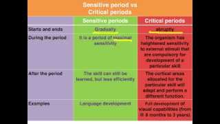 Sensitive vs Critical periods of learning - VCE Psychology
