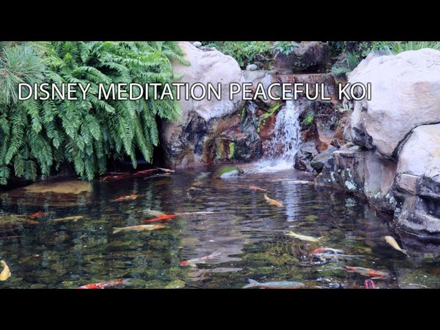 🔴10 Hour Relaxing Deep Sleep Music Peaceful Dreams - Disney Meditation Japanese Koi Pond Epcot