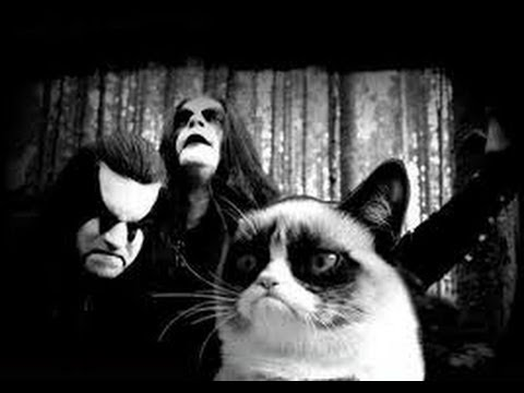 Black Metal Cats (блек метал коты)