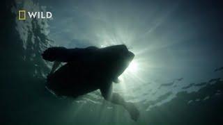 Rekin znienacka zaatakował surfera na desce! [Atak rekina]