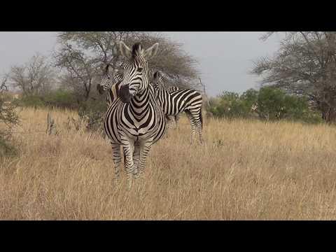 Kruger Park deel 3
