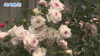 震災復興支援オープンガーデン「バラの香りに誘われてバラと絵画展」展