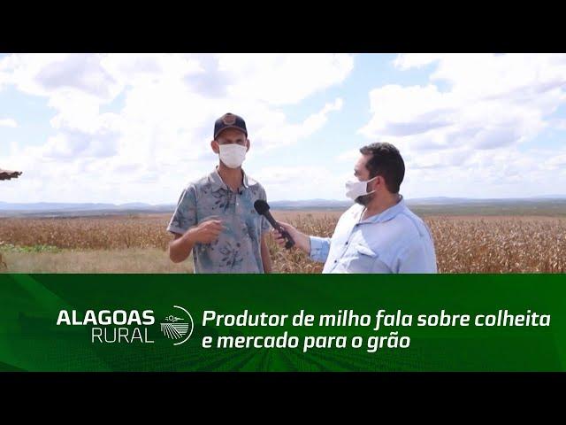Produtor de milho fala sobre colheita e mercado para o grão