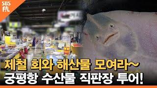 제철 회와 해산물 모여라~ 궁평항 수산물 직판장 투어!…