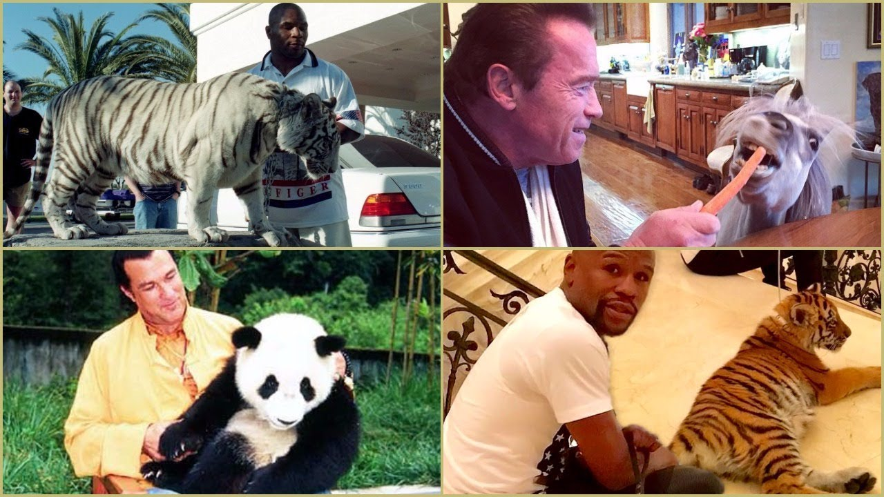Celebrities Owning Exotic or Weird Pets.
