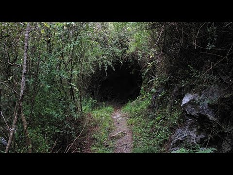 10 Creepiest Things Found In The Woods Mp3