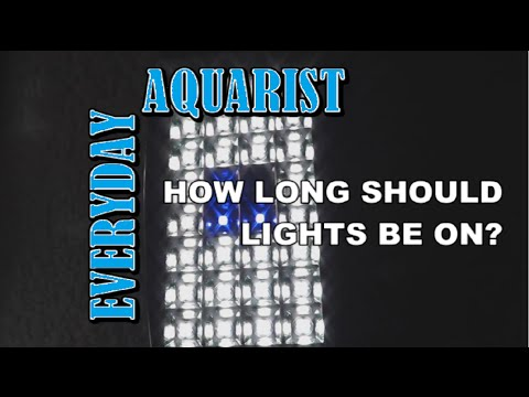 How Long Should Aquarium Lights Be On?