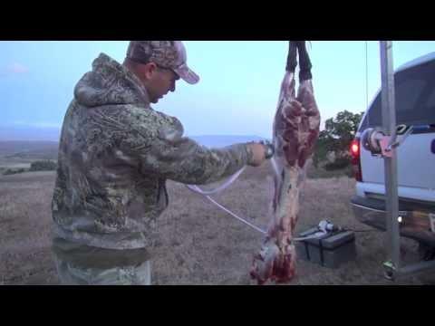 CALIFORNIA WILD PIG HUNT SOLO