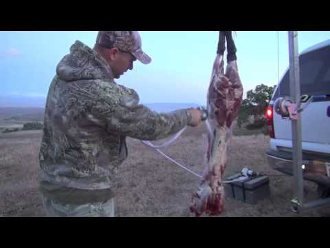 CALIFORNIA WILD PIG HUNT SOLO