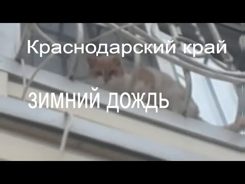 Переезд /Vlog/Хитрый кот/погода на Кубани/Переезд в Краснодар