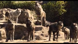 Книга джунглей (IMAX-трейлер фильма) / The Jungle Book
