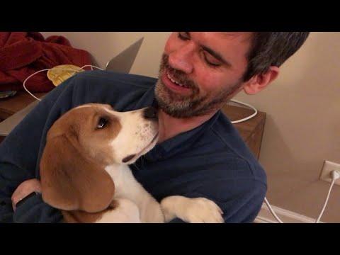 Resultado de imagen para 犬 Beagles