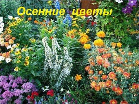 Садовые цветы фото и floretsru