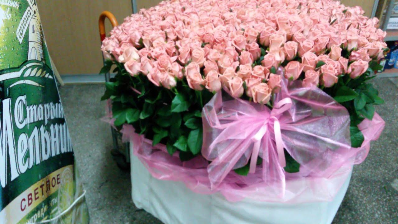 фото 501 роза