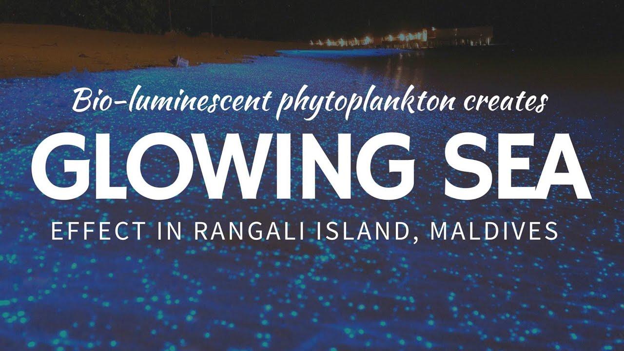 Glowing Water Beaches BLUE Bioluminescence At Maldive Islands - Maldive island beach glow