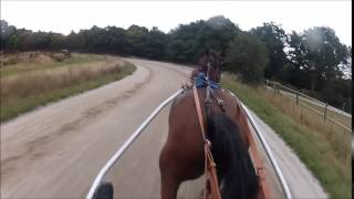 Travail trotteur - Sulky - GoPro