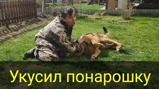 Борьба хозяина и собаки.  Кто кого?