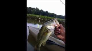 Fish caught using 123 Fishing Rig Products