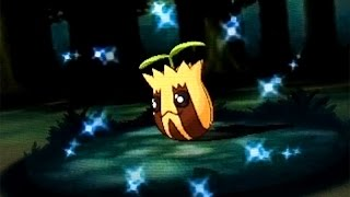 [DEXNAV] Shiny Sunkern after 12 Encounters in Mirage Forest! (Pokemon Alpha Sapphire)