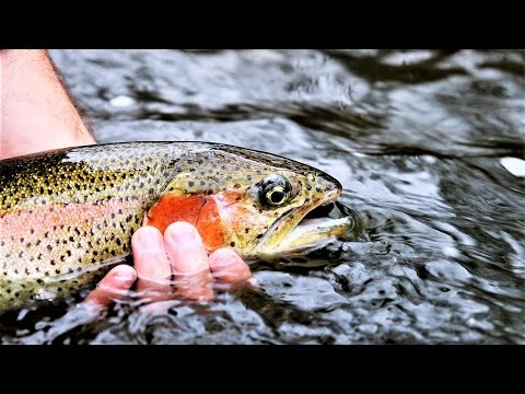 Fly Fishing for Big NJ Winter Rainbows