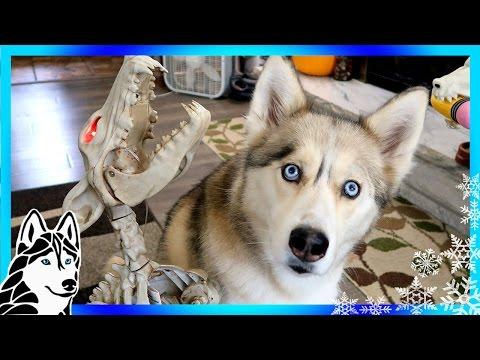 HUSKIES REACT TO HOWLING BONE DOG | Dogs React | Scary Halloween prank