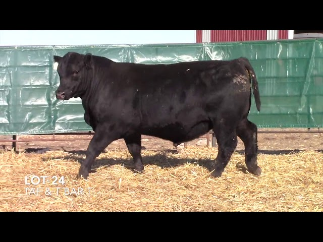 T Bar T and Taliaferro Angus Lot 24