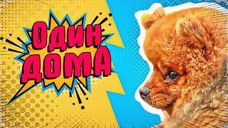 Один дома,или как отучить собаку выть и лаять, когда она остаётся дома одна(По моему мнению, собаки мелких пород лучше всех владеют искусством манипулирования человеком. В этом видео..., 2015-04-22T15:19:32.000Z)