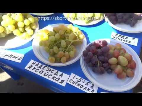 Сорта винограда  Выставка в Новочеркасске 2018.