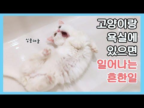 데굴꼬비 살랑쵸비 - 고양이랑 욕실에 있으면 일어나는 흔한 일