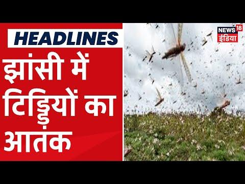 UP के Jhansi में आफत बनकर आया टिड्डियों का झुंड, फसलों को हुआ काफी नुकसान