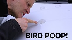BEST TIP: Removing Bird Poop from your Paint!