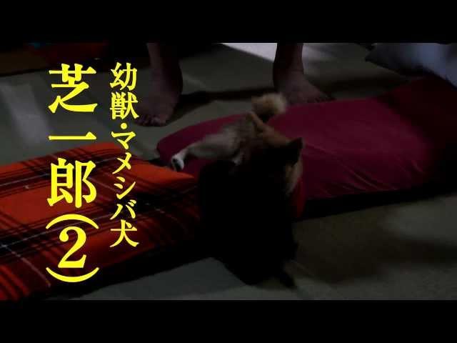 映画『マメシバ一郎 3D』予告編