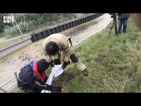 DUTCH FIREFIGHTERS - DIER IN PROBLEMEN - PRIO2