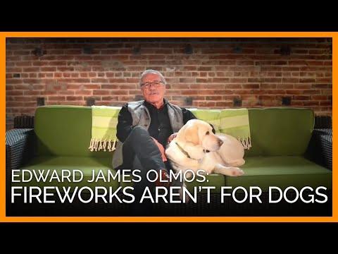 the dog says edward