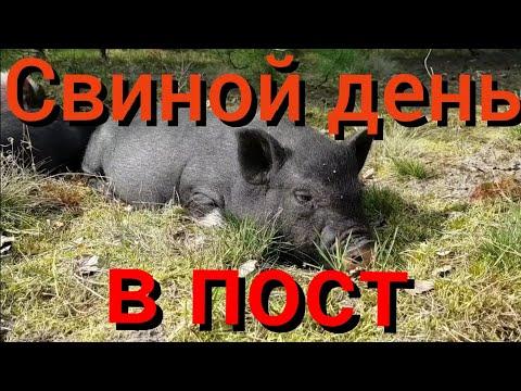 Чем занимаются белорусские хуторяне пока все сидят на карантине и спасаются от коронавируса?