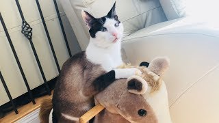 Cute CAT Riding Toy Rocking Horse Video FUNNY!