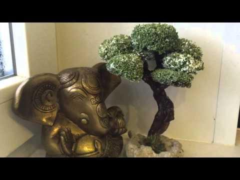 Живое дерево бонсай из исландского мха (цетрария)
