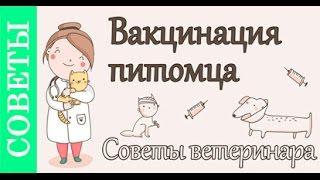 Вакцинация животных, советы ветеринара