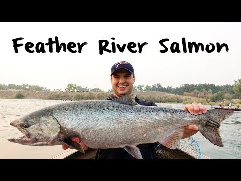 Feather River Salmon