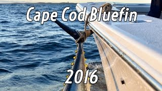 Cape Cod Bluefin 2016