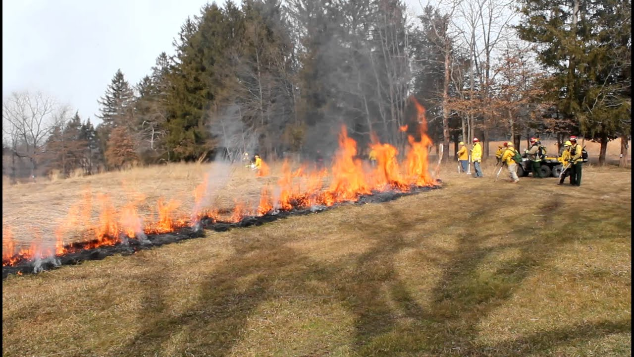 Image result for controlled burn farming