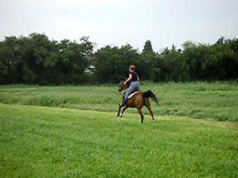 arab horse racing through the field