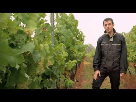 Rain  Tyson Stelzer  People of the Vines