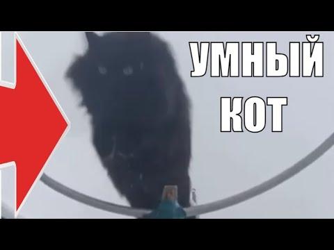 Черный кот Чернуха самый умный кот в мире ❤️ smart cat